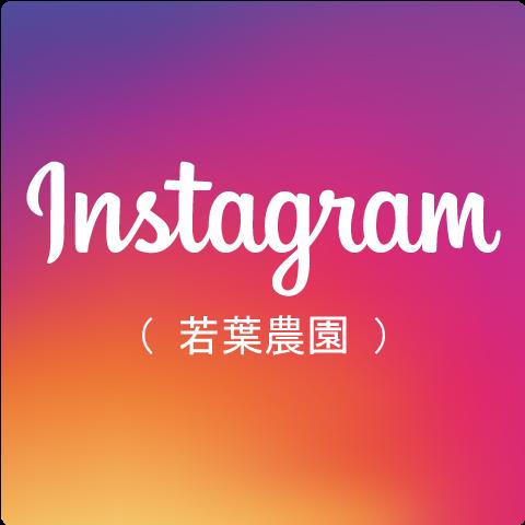 Instagram(若葉農園)